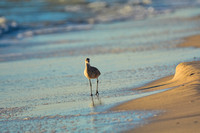 Shorebird In Cape San Blas 041720172657