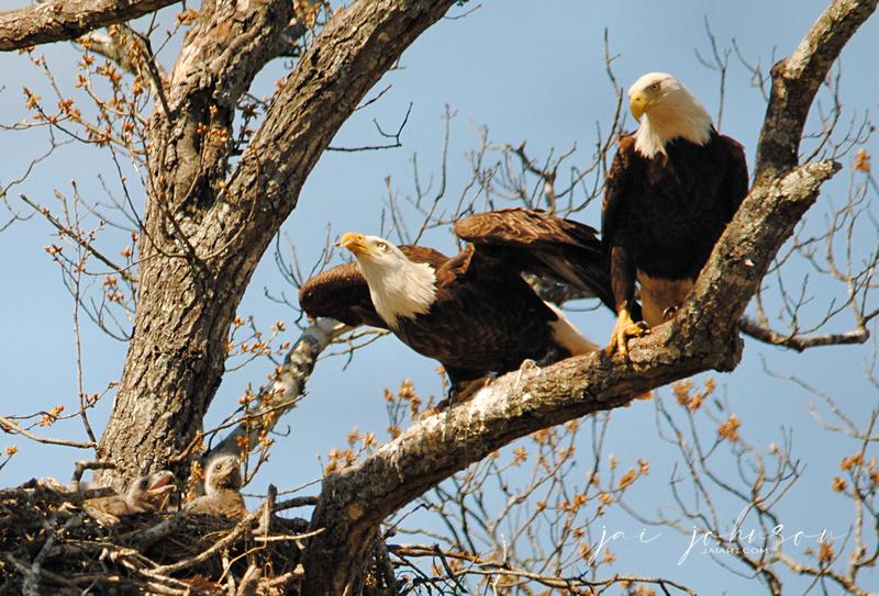 Shiloh Eagle Family