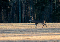Whitetail Buck Shiloh Tennessee 122320167371